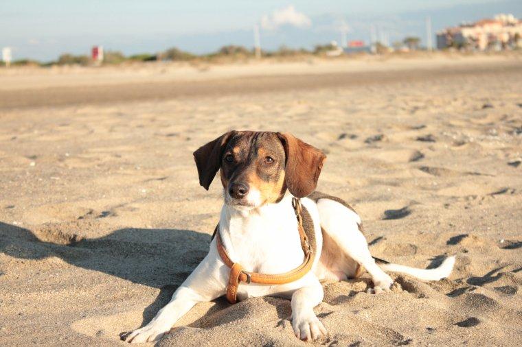 « Balade à la plage. »