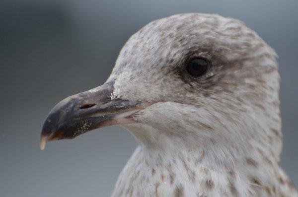 St Malo, jour de grisaille
