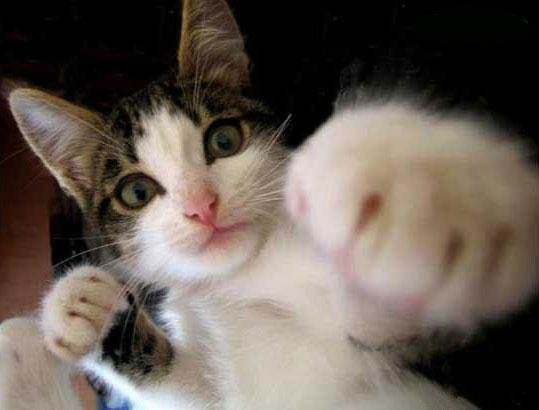 Agression du chat.