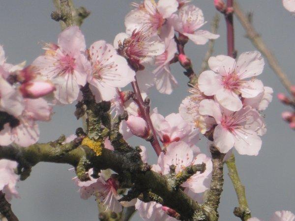 le printemps approche