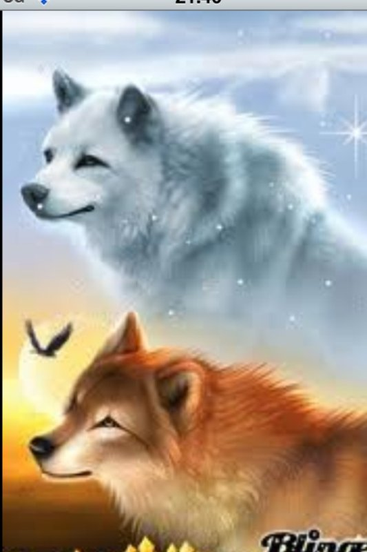 Loup du Nord et loup du Sud