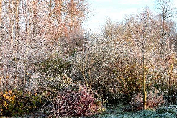 de l'hiver de  mon jardin
