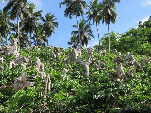 Cueillette de l 39 ylang ylang mayotte les globes for Plante ylang ylang