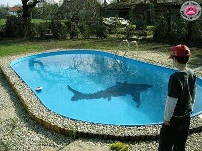 J mi mon poisson rouge dans ma piscine blog de yael2314 for Entretien bassin poisson rouge