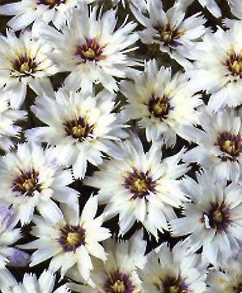 Noms des fleurs, couleur, signification, langage.