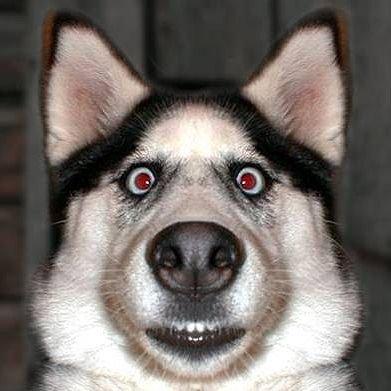 le chien qui et énervé - Blog de gossbo123