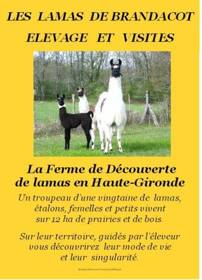 Blog de lamadebrandacot elevage de lamas en haute for Chambre agriculture gironde