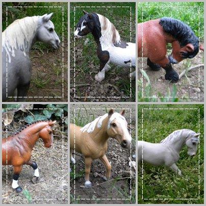 Présentation des chevaux