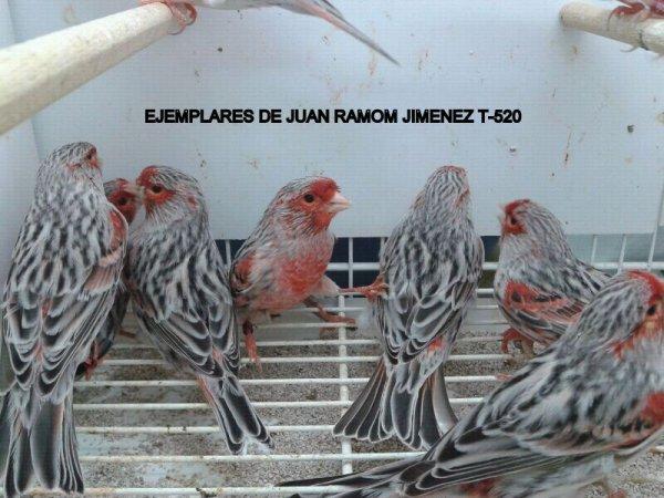 �QUE OS PARECEN ESTOS AGATAS ROJO MOSAICO DE JUAN RAMON JIMENEZ T-520?