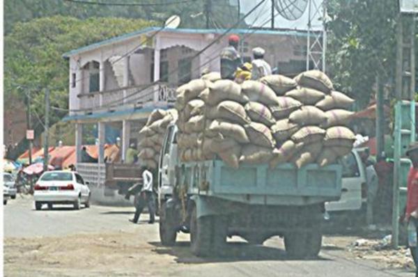 Ndzuani. Baisse du prix du girofle : Producteurs, autorités et exportateurs s'accusent