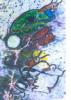 Artiste et l' Art ,l' Esprit et  la  Matiére            LA VOIE ROYALE