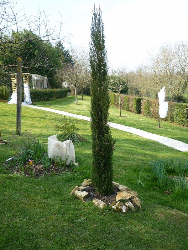 D 39 autres arbres plant s en 2012 vite au jardin - Cypres de florence totem ...