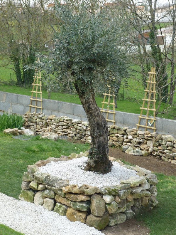 il est plant mon olili mon olili mon olivier vite au jardin. Black Bedroom Furniture Sets. Home Design Ideas