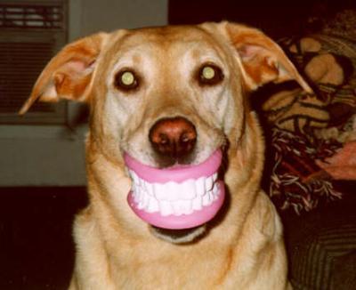 chien qui rit.  Image & Photo de sergebays de Photos Art et Culture