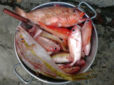 Blog de visit972 page 19 la martinique destination for Poisson rouge nourriture vacances