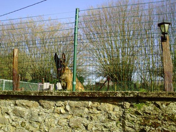 Comment rehausser une cloture a moindre cout voici une petite astuce les amis blog de for Cloture jardin pour chien
