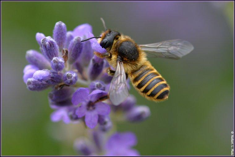 article  N� 1470  les insectes ..........