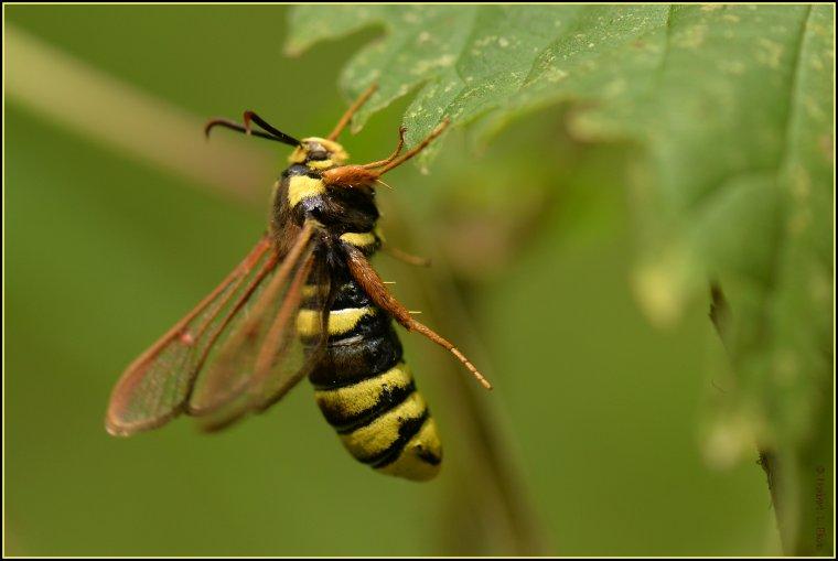article  N� 1471  les insectes .........