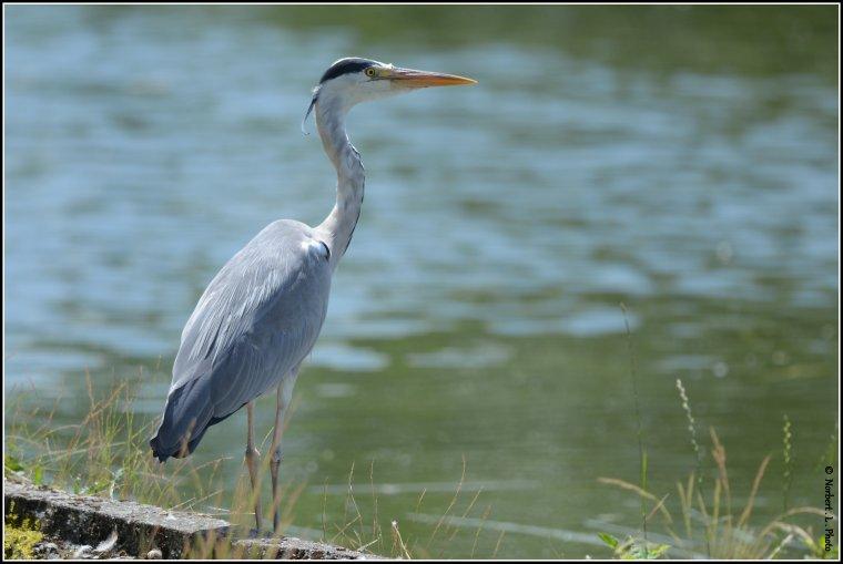 article  N � 1473  les oiseaux ..........