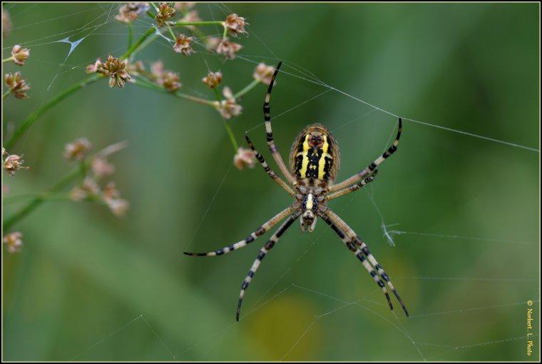 article  N� 1477  les Arachnides  ..........