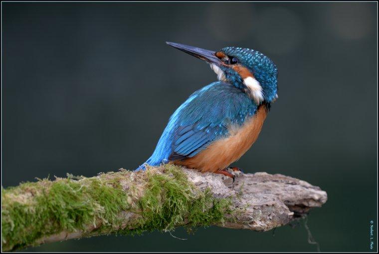 article  N� 1480  les oiseaux .......