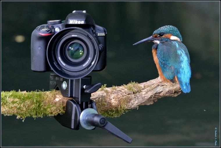 article  N� 1482  les oiseaux ..........