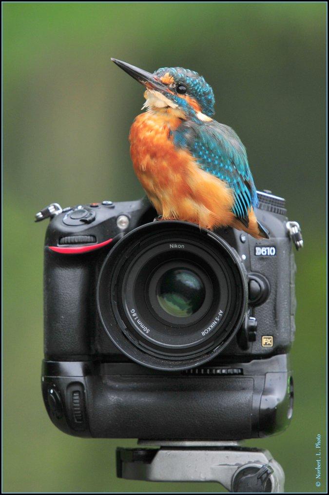 article  N� 1483  les oiseaux ...........