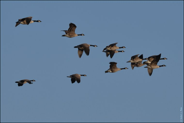 article  N� 1484  les oiseaux .........