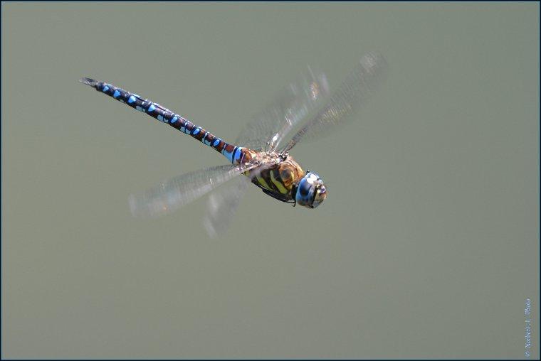 article  N� 1485  les insectes  .......