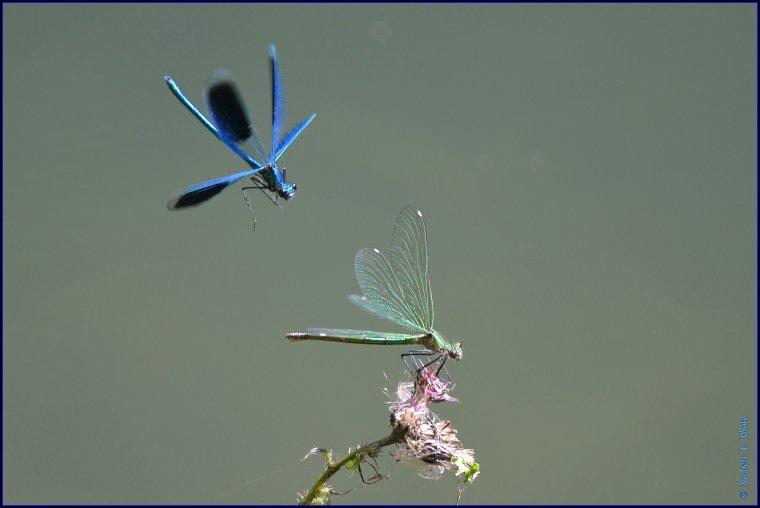 article  N° 1485  les insectes  .......