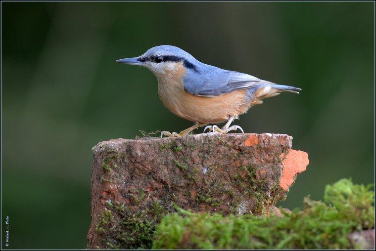 article  N° 1486  les oiseaux ........