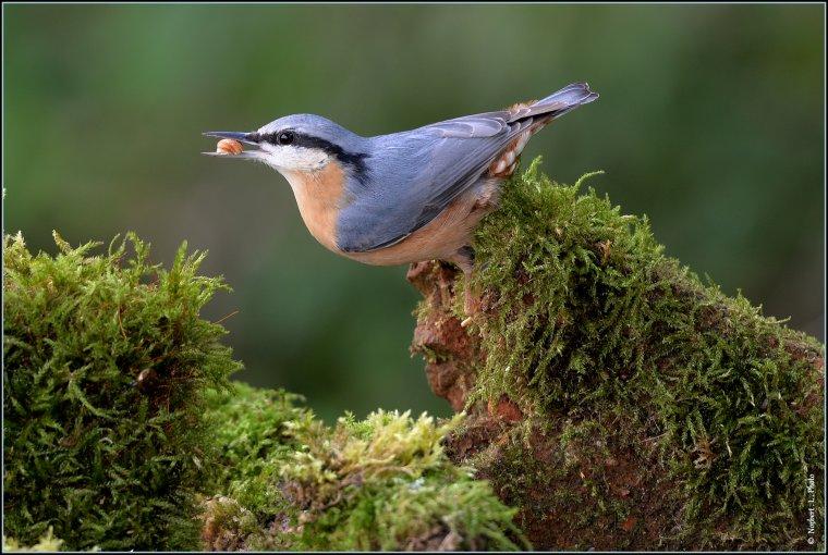 article  N� 1486  les oiseaux ........