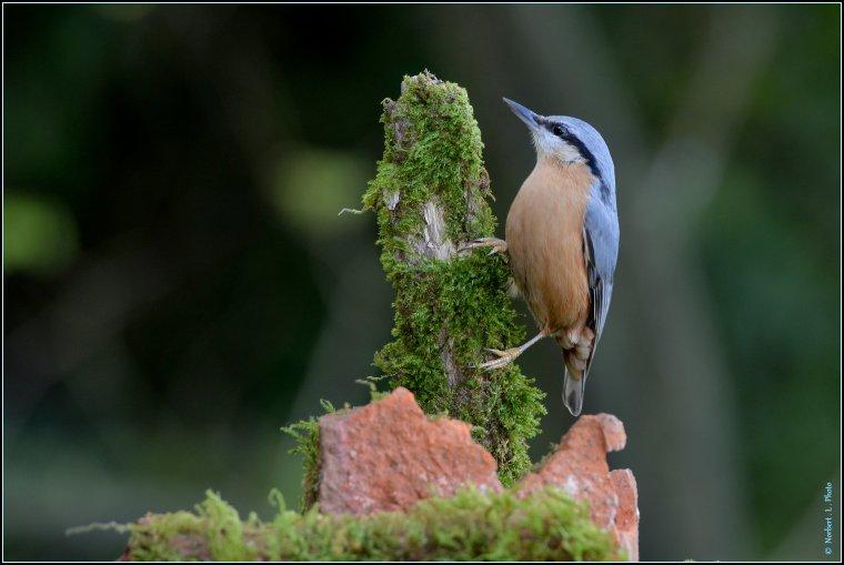 article  N� 1488   les oiseaux .........