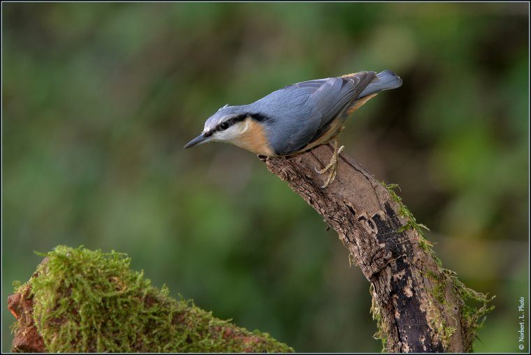 article  N° 1488   les oiseaux .........
