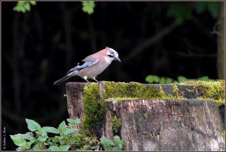 article  N° 1489  les oiseaux ...........