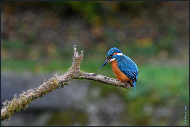 article  N° 1490  les oiseaux ..........