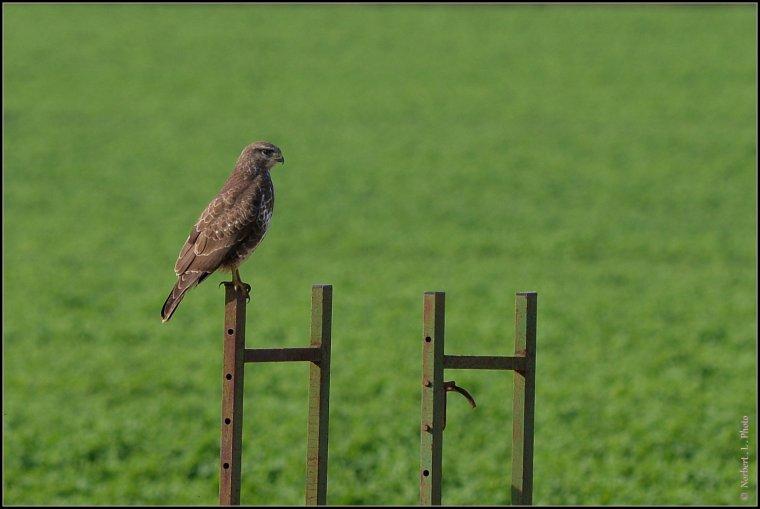 article  N° 1491  les oiseaux ...........