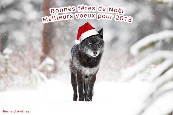 JOYEUX NOEL et BONNES FETES   de FIN d'ANNEE