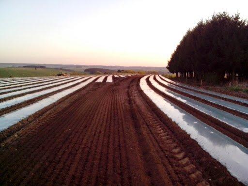 Semis de maïs 2014