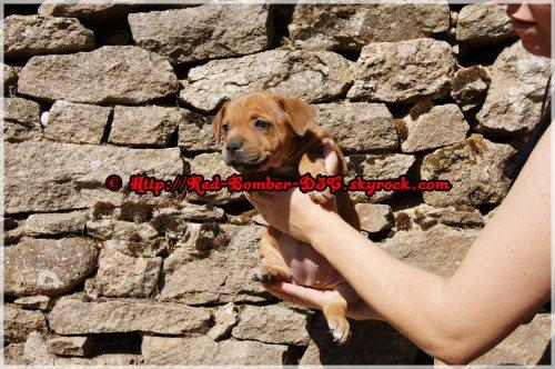 Girl In Love Red Bomber D3C aka Genna à 1 mois et 14 jours