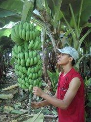HAMID  2010