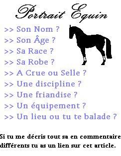 PORTRAIT EQUIN : Pour parler à un cheval, il n'y a pas besoin de mots. C'est une étreinte charnelle qui alimente nos rêves.