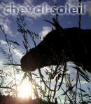 Photo de cheval-soleil