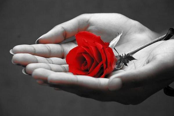 ¤¤¤ Veuillez faire suivre cette rose s'il vous plait ¤¤¤