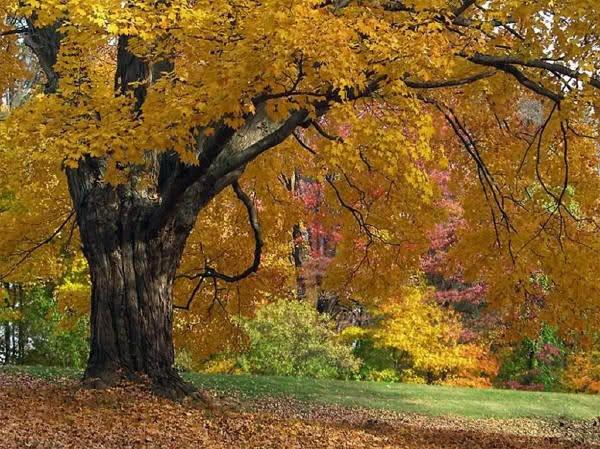 *** Les couleurs de l'automne ***
