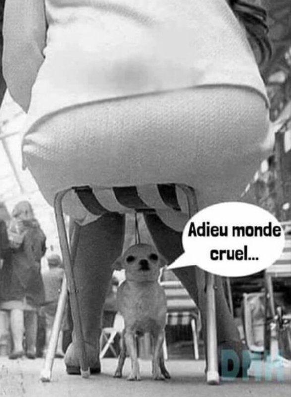 Monde cruel!!!