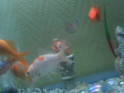 Mais poisson lol