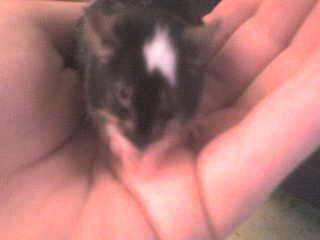 Hommage a ma petite souris