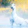 A-Horse-in-A-Plain