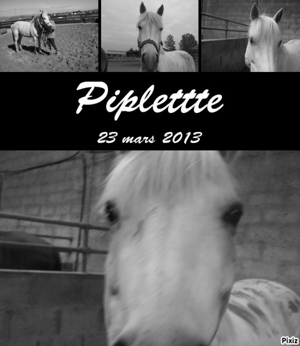 Piplette <3